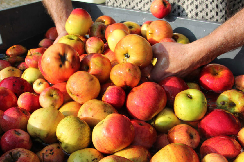 Producing cider